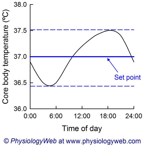 Circadian rhythm of core body temperature. Click for additional details.