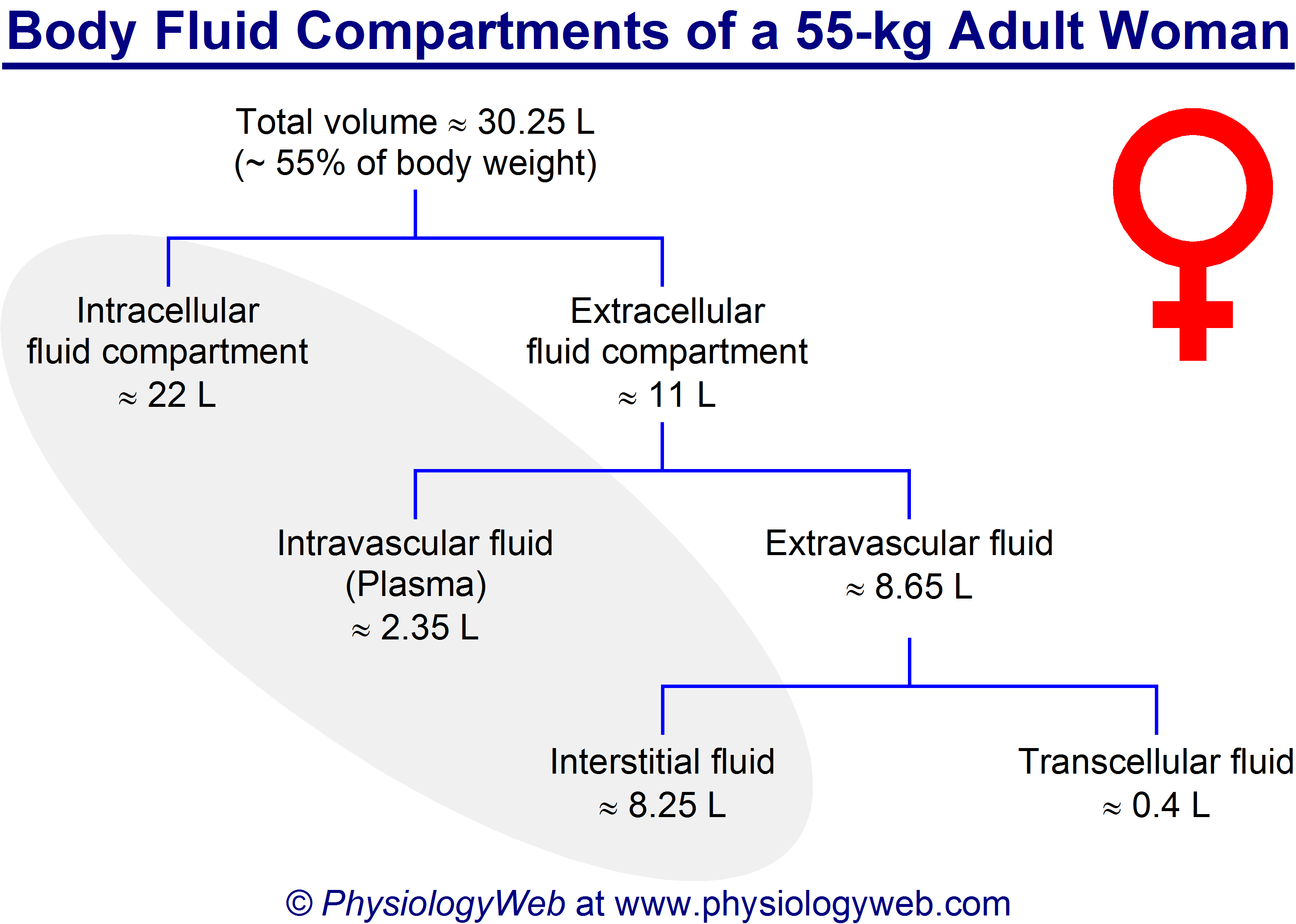 Body fluid compartments of a 55-kg adult woman.