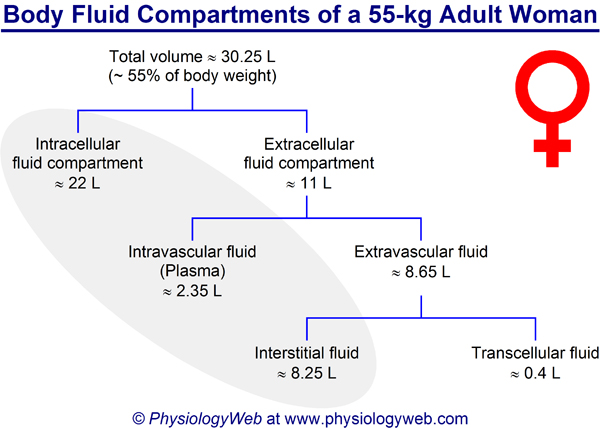 Body fluid compartments of a 55-kg adult woman. Click for additional details.