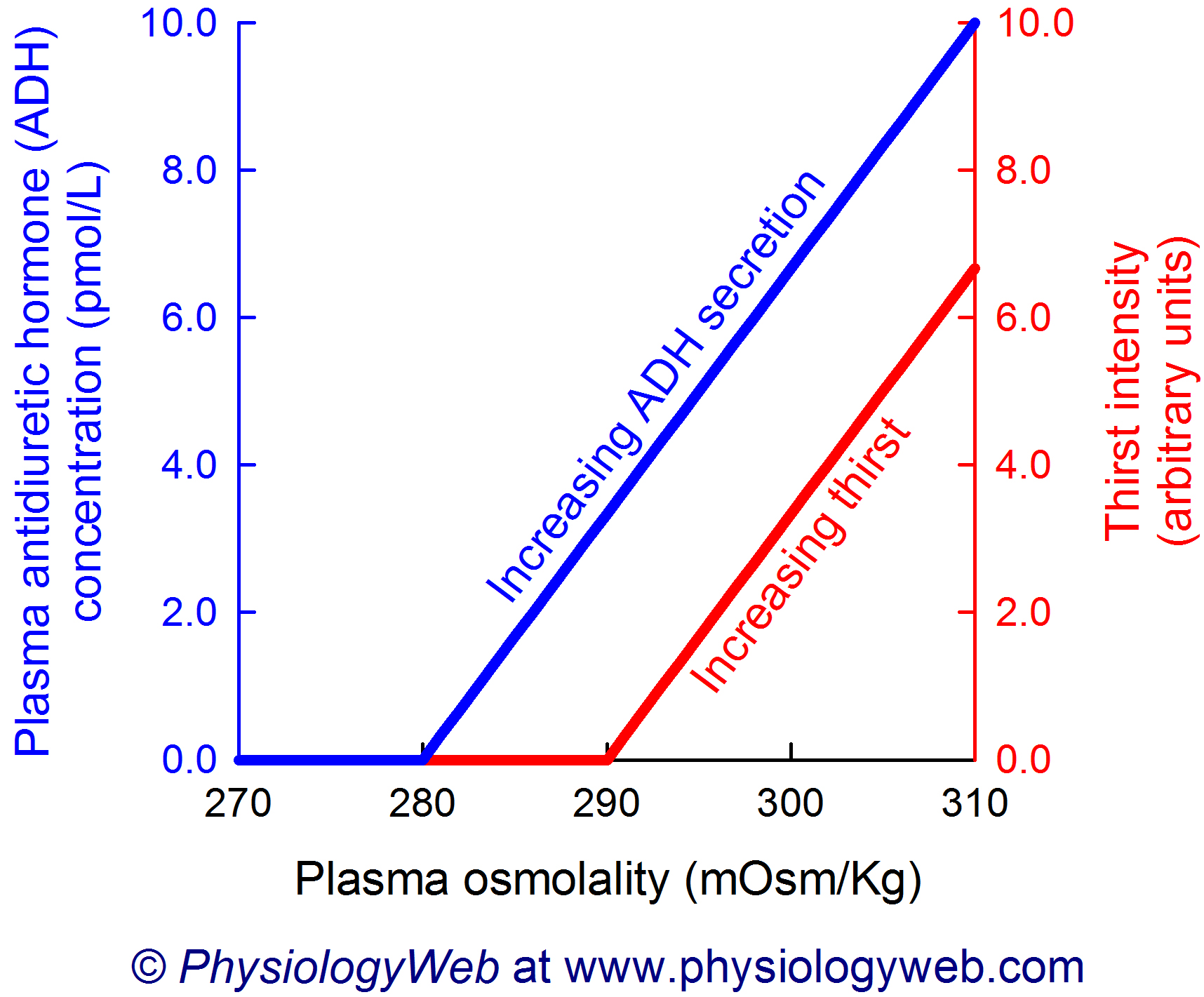 Increases in plasma osmolality increase antidiuretic hormone (ADH) secretion and thirst intensity.