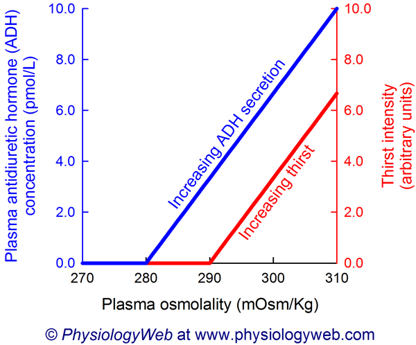 Increases in plasma osmolality increase antidiuretic hormone (ADH) secretion and thirst intensity. Click for higher resolution image.