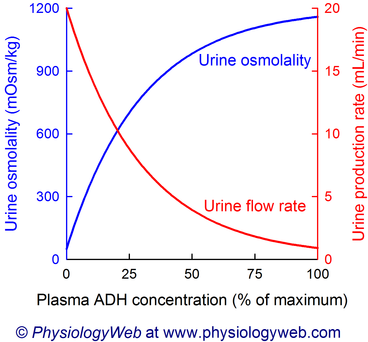Relationship between plasma antidiuretic hormone (ADH) concentration and urine osmolality and urine production rate.