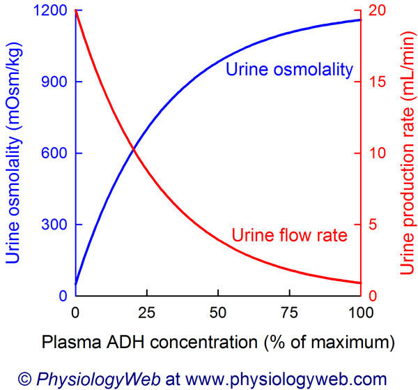 Relationship between plasma antidiuretic hormone (ADH) concentration and urine osmolality and urine production rate. Click for additional details.