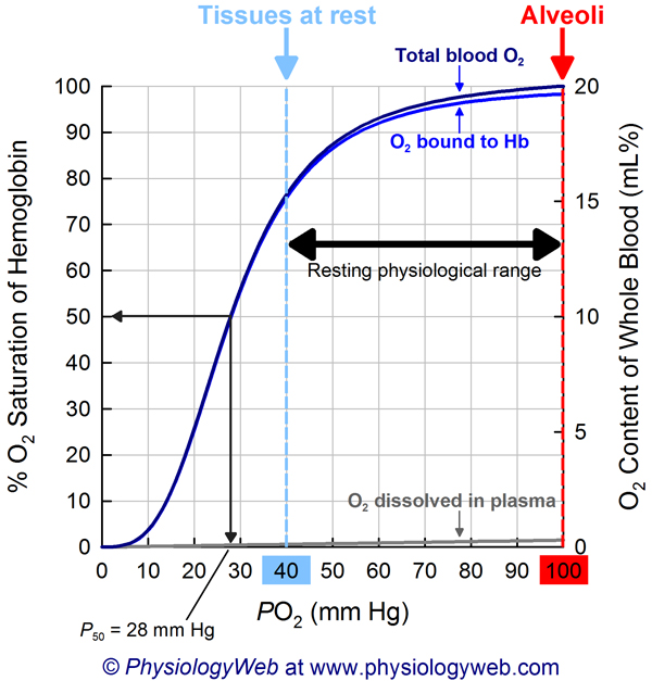 Oxyhemoglobin dissociation curve. Click for higher resolution image.