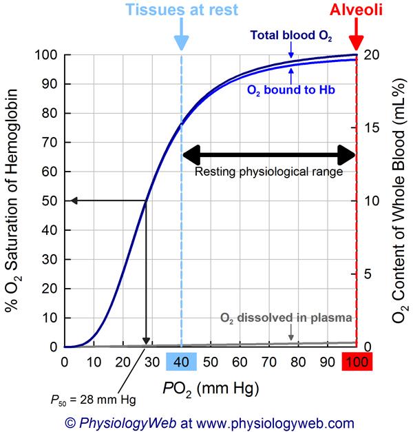Oxyhemoglobin dissociation curve. Click for higher resolution image.