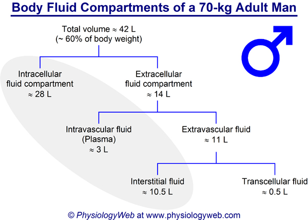 Body fluid compartments of a 70-kg adult man. Click for additional details.