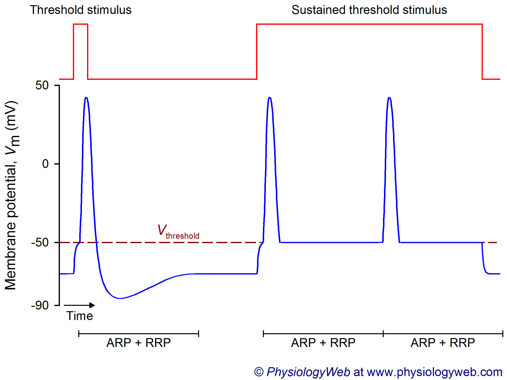 Frequency coding in the nervous system: Threshold stimulus