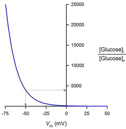 Graphical representation of the effect of the membrane potential (Vm) on concentrative capacity of the Na+/glucose cotransporter (SGLT).