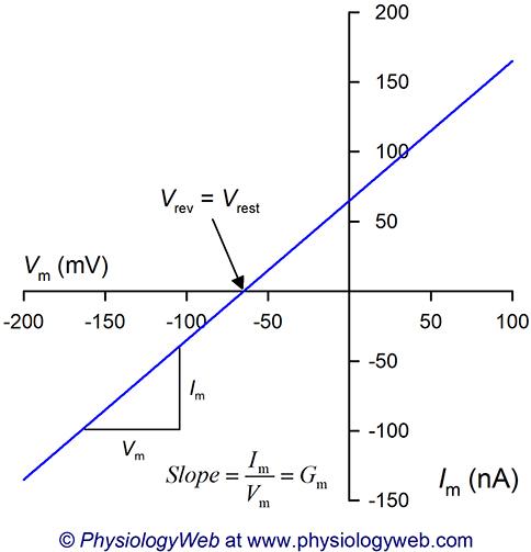 Current-voltage (I-V) relationship for biological membranes.