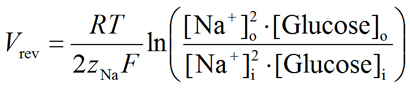 Equation for the thermodynamic reversal potential (Vrev) of the Na+/glucose cotransporter (SGLT)