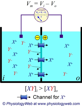 Derivation of the Nernst Equation - PhysiologyWeb